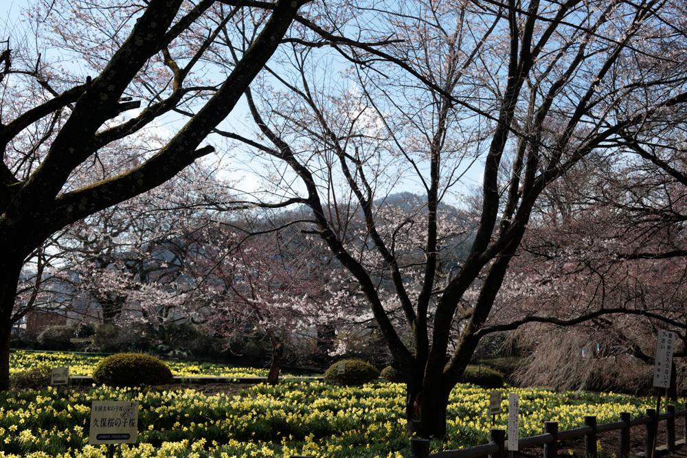 実相寺 -2- ~北杜の桜2019~ _d0011713_11080503.jpg