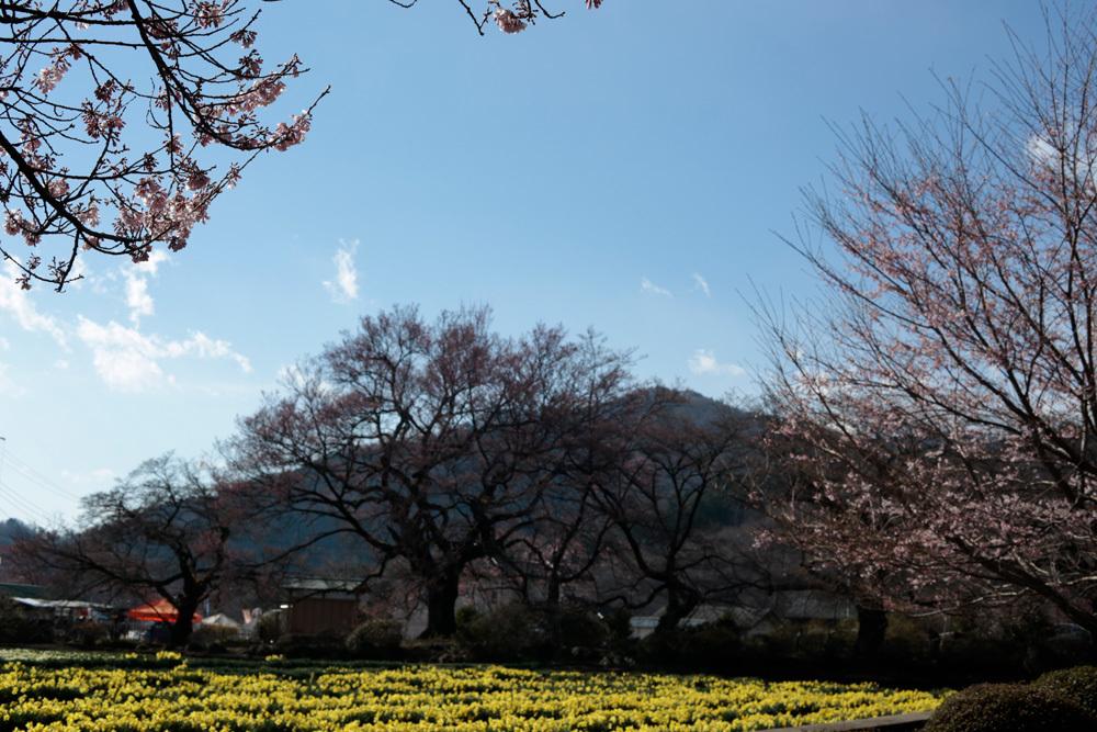 実相寺 -2- ~北杜の桜2019~ _d0011713_11120121.jpg