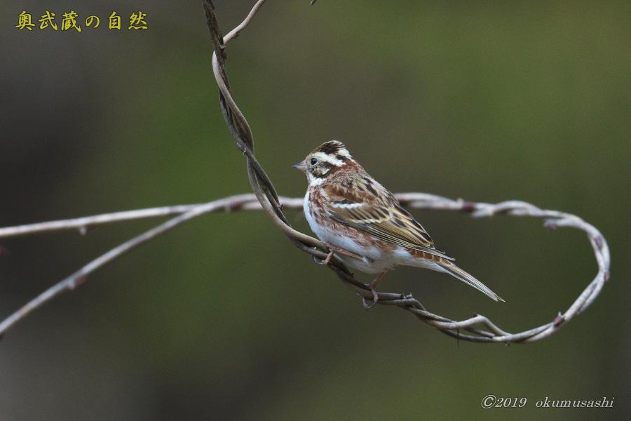 お山の冬鳥たち③_e0268015_21280522.jpg