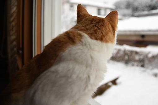 雪の誕生日にアレしてソレして_b0259218_06065833.jpg