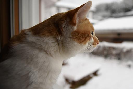 雪の誕生日にアレしてソレして_b0259218_06070470.jpg