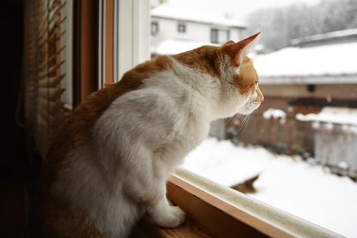 雪の誕生日にアレしてソレして_b0259218_06230169.jpg