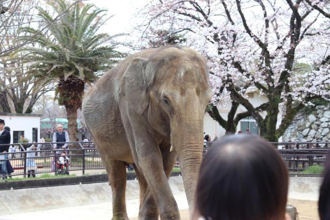 姫路市立動物園/休日/姫路城_c0225122_15121840.jpg