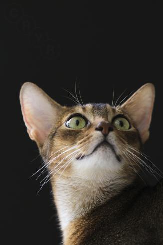 [猫的]ブラックシリーズ_e0090124_00143698.jpg