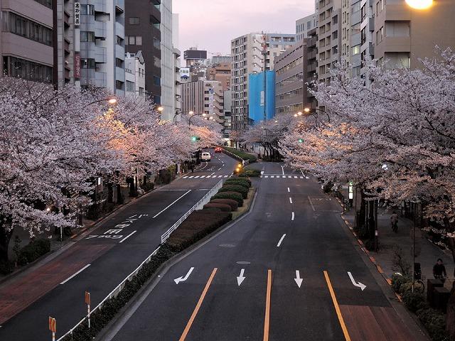 日曜さくら散歩_c0062832_15431307.jpg