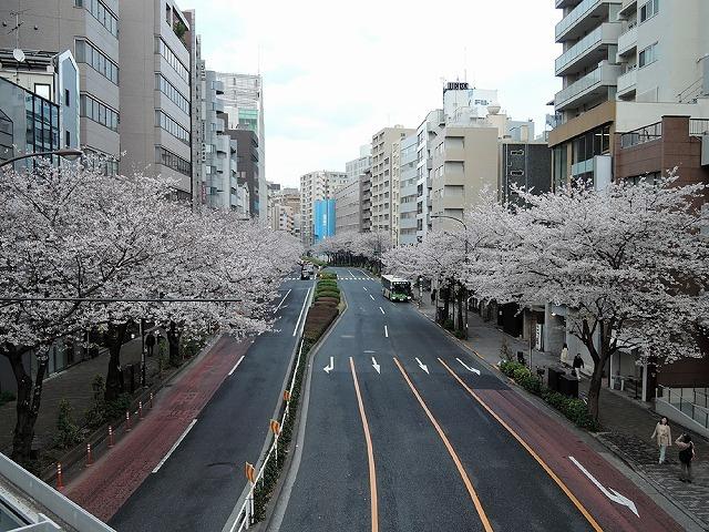 日曜さくら散歩_c0062832_15431308.jpg