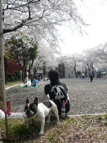 遠ざかるお花見_b0307951_23091774.jpg