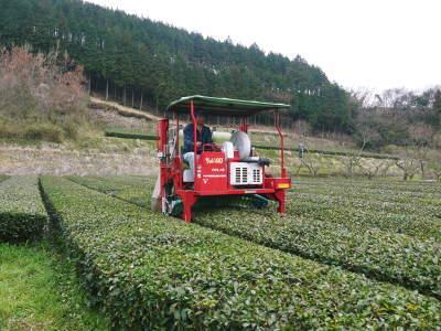 菊池水源茶 5月の1番茶の収穫へ向け、元気な新芽を芽吹かせるための仕上げ剪定の様子_a0254656_16510731.jpg