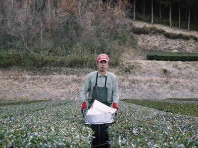 菊池水源茶 5月の1番茶の収穫へ向け、元気な新芽を芽吹かせるための仕上げ剪定の様子_a0254656_17413082.jpg