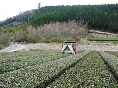 菊池水源茶 5月の1番茶の収穫へ向け、元気な新芽を芽吹かせるための仕上げ剪定の様子_a0254656_17491137.jpg