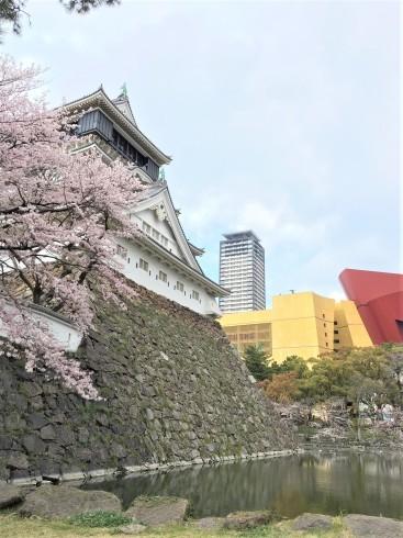 夜桜…防寒対策必要です。in小倉城_d0082356_12454187.jpg