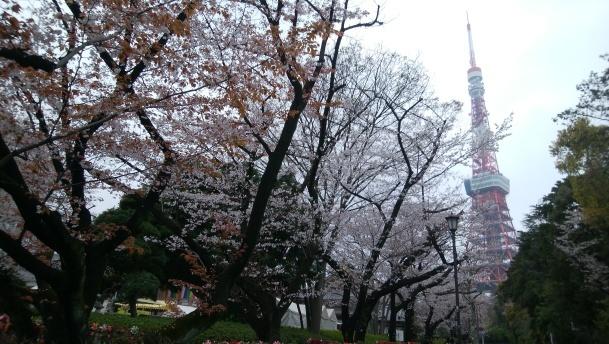 都内 桜見学サイクリング 45㎞でした。_f0073557_00060970.jpg