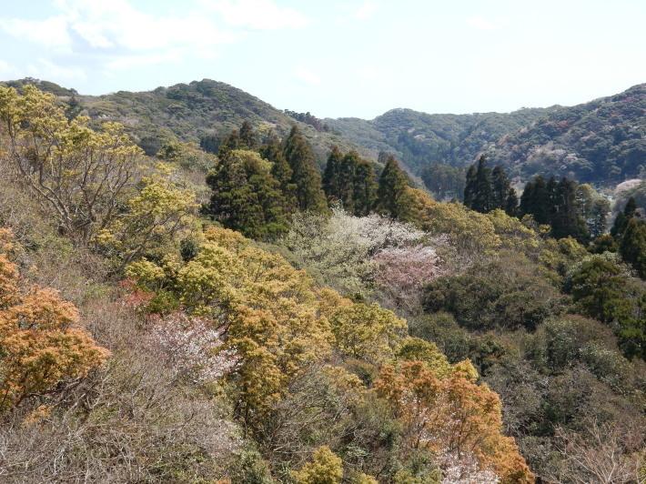 '19,4,1(月)今日も桜公園を独り占め!_f0060461_07263726.jpg
