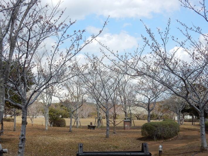 '19,4,1(月)今日も桜公園を独り占め!_f0060461_07372596.jpg