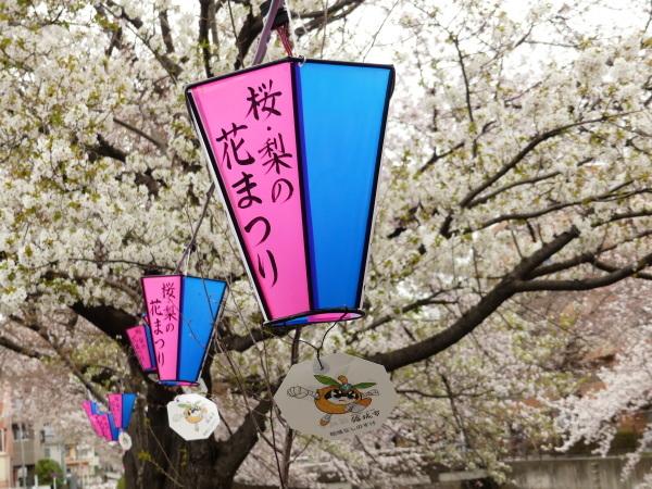 三沢川の桜並木_a0351368_21380480.jpg