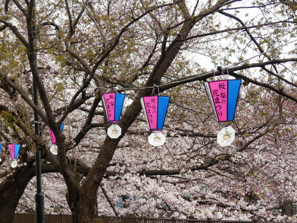 桜まつり_a0351368_21414950.jpg