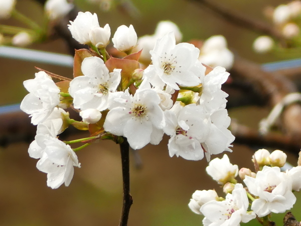 桜まつり_a0351368_21425061.jpg