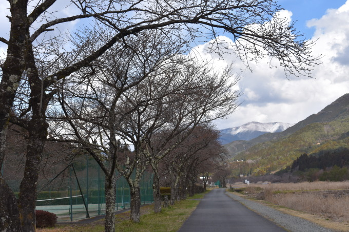桜の開花情報_c0238069_14415752.jpg