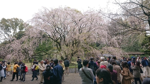 六義園でお花見_a0221584_14073961.jpg