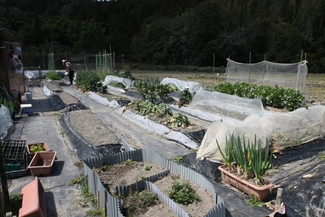 春の北摂の家庭菜園・・!!_f0229190_15051033.jpg