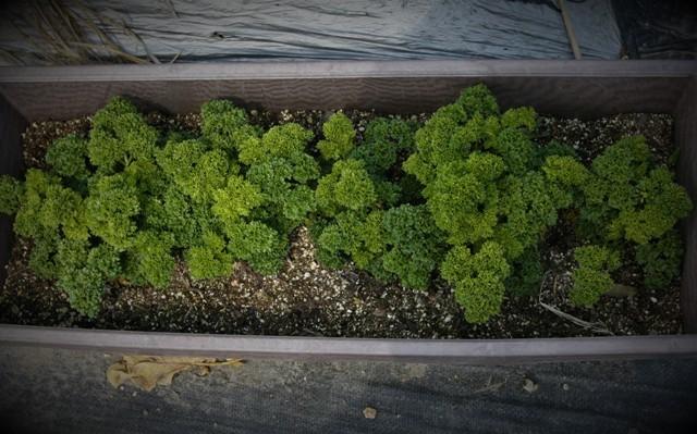 春の北摂の家庭菜園・・!!_f0229190_15102177.jpg