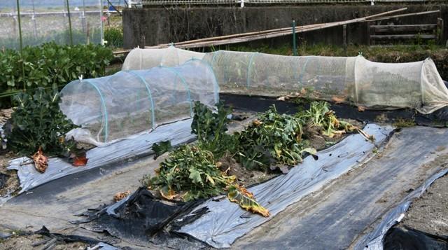 春の北摂の家庭菜園・・!!_f0229190_15275003.jpg