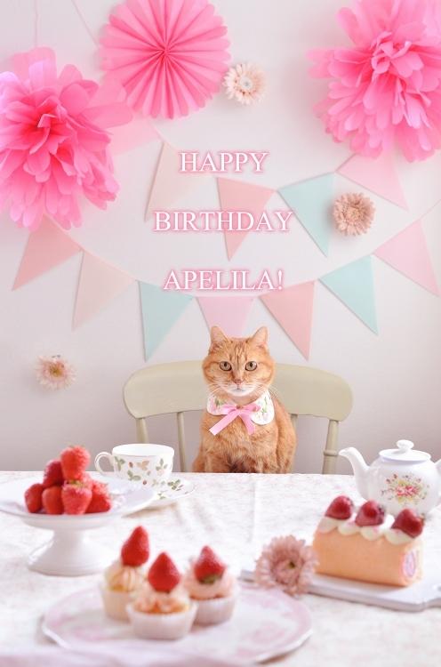 あぺりら13歳の誕生日  Happy Birthday Apelila!_d0025294_21111695.jpg