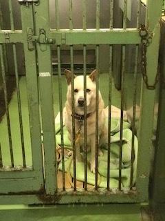 【犬・移動先募集】センター(支所)収容(3/30訪問)_f0242002_14380261.jpg