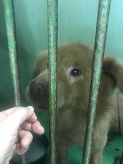 【犬・移動先募集】センター(支所)収容(3/30訪問)_f0242002_16052542.jpg