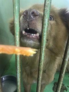 【犬・移動先募集】センター(支所)収容(3/30訪問)_f0242002_16251797.jpg