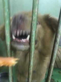 【犬・移動先募集】センター(支所)収容(3/30訪問)_f0242002_16252315.jpg