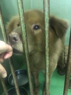 【犬・移動先募集】センター(支所)収容(3/30訪問)_f0242002_16253508.jpg