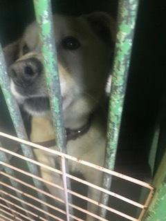 【犬・移動先募集】センター(支所)収容(3/30訪問)_f0242002_16293505.jpg