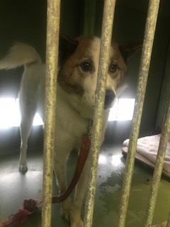 【犬・移動先募集】センター(支所)収容(3/30訪問)_f0242002_16302412.jpg