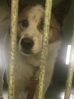 【犬・移動先募集】センター(支所)収容(3/30訪問)_f0242002_16302952.jpg