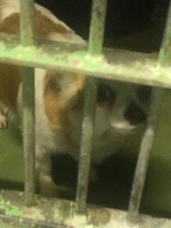 【犬・移動先募集】センター(支所)収容(3/30訪問)_f0242002_16304842.jpg