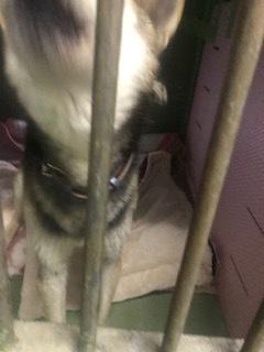 【犬・移動先募集】センター(支所)収容(3/30訪問)_f0242002_16342810.jpg