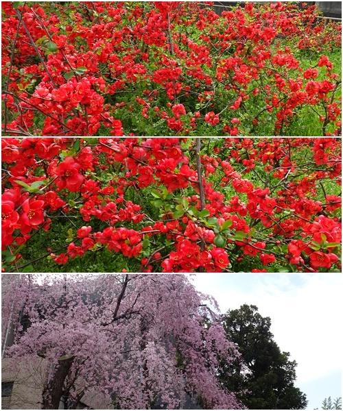 桜を見ながら 玉川上水を歩く(最終章)_c0051105_10412679.jpg