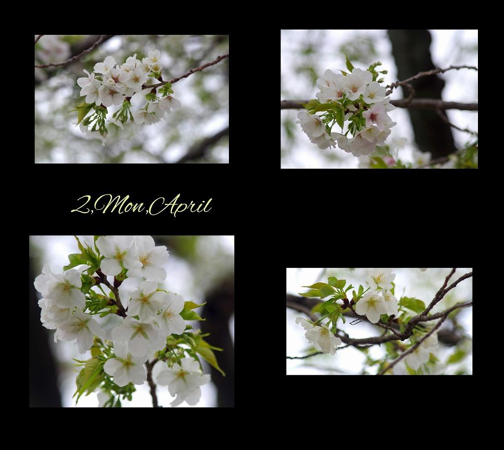 菫も咲いている_d0147812_17432763.jpg