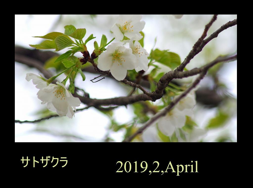 菫も咲いている_d0147812_17434132.jpg