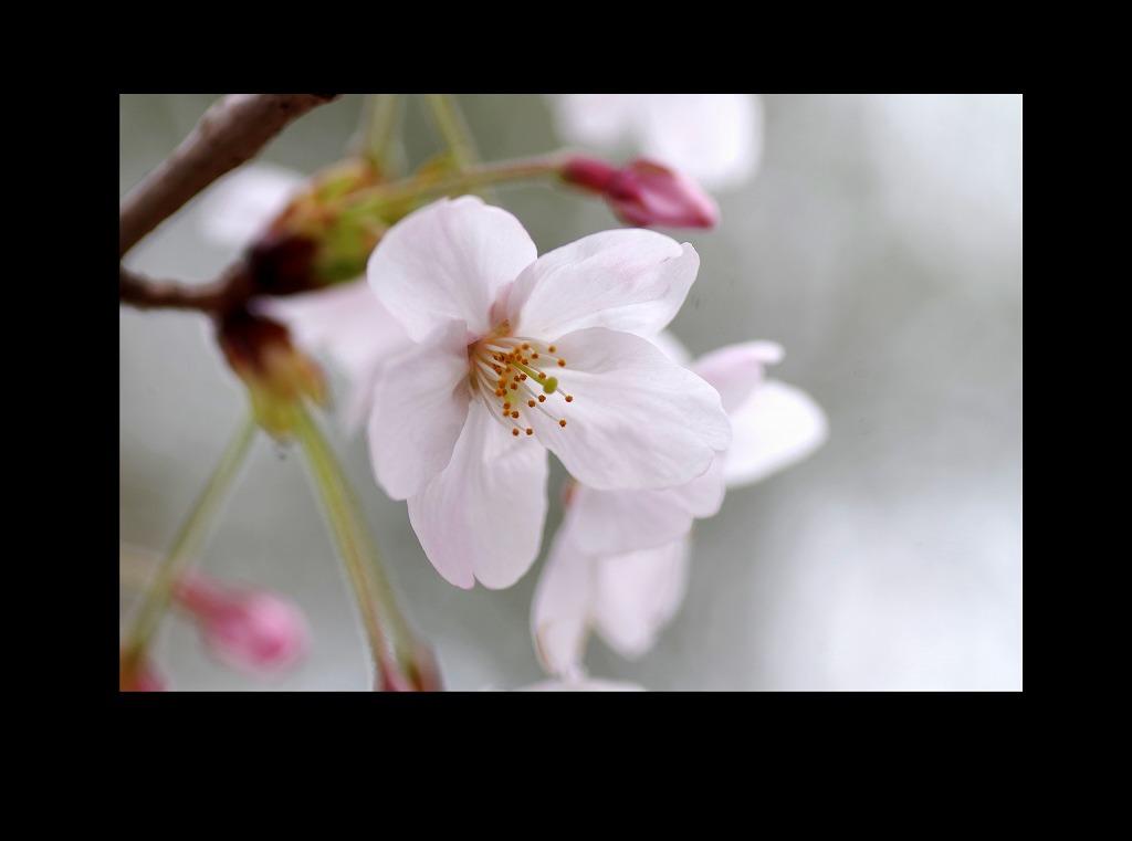 菫も咲いている_d0147812_17435058.jpg