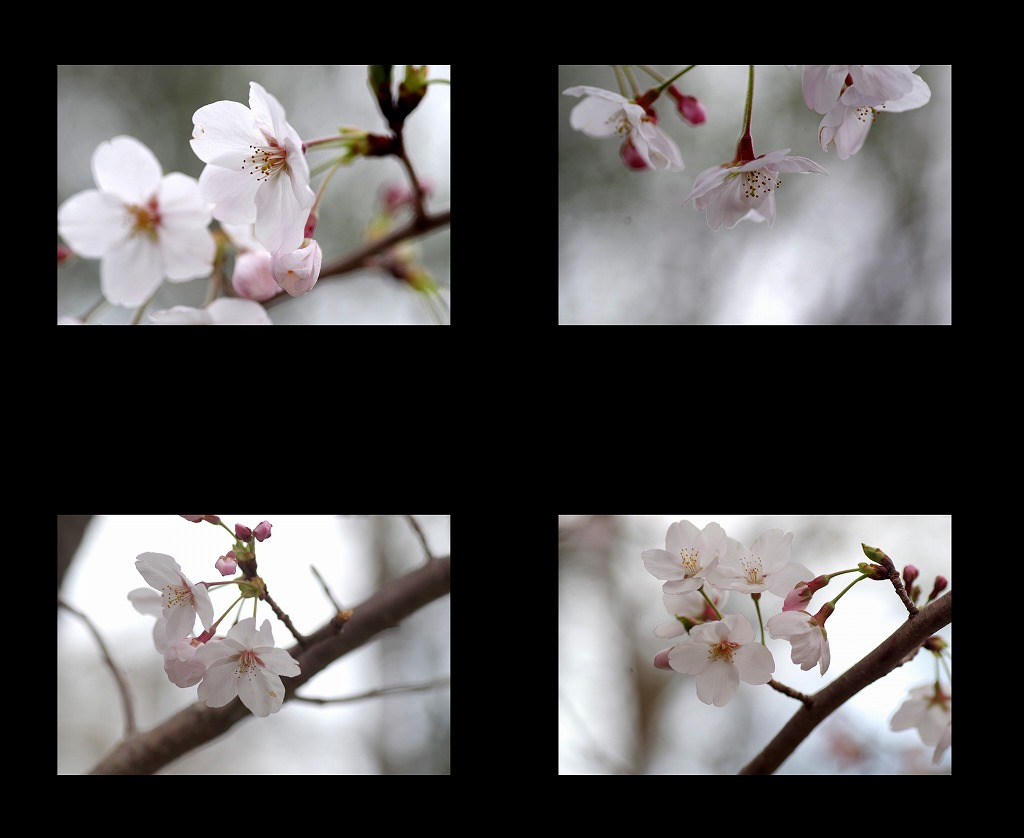 菫も咲いている_d0147812_17435895.jpg