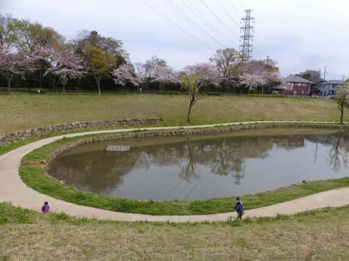 お花見2019 身近な公園編_f0296312_19280443.jpg