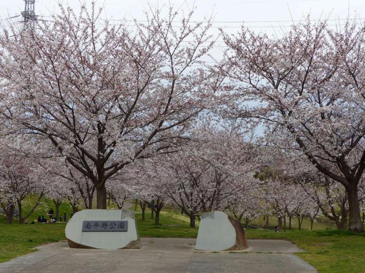 お花見2019 身近な公園編_f0296312_19311122.jpg