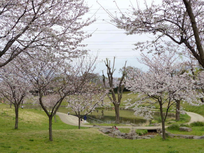 お花見2019 身近な公園編_f0296312_19311473.jpg