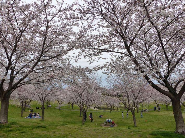お花見2019 身近な公園編_f0296312_19312312.jpg
