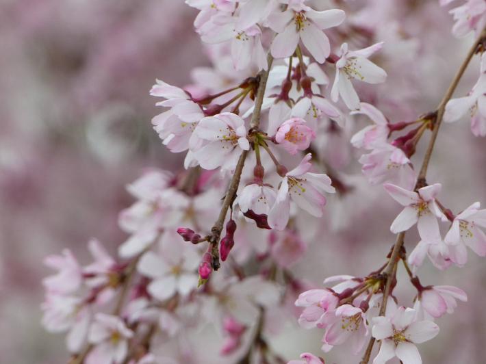 お花見2019 身近な公園編_f0296312_19375268.jpg