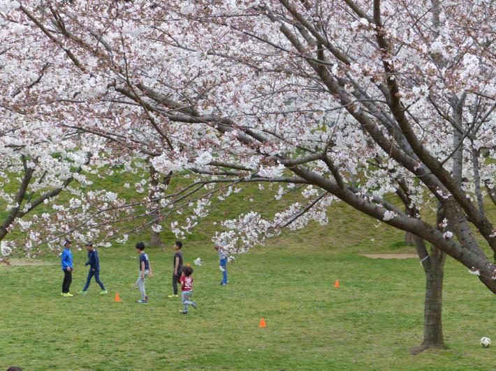 お花見2019 身近な公園編_f0296312_19464406.jpg