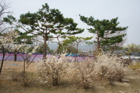 【ソウル旅行 ①景福宮】_f0215714_16441090.jpg