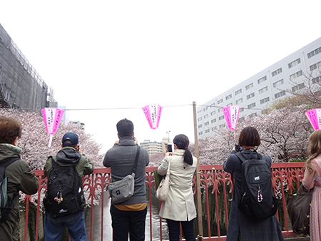 日曜日の目黒川_f0097523_13144604.jpg